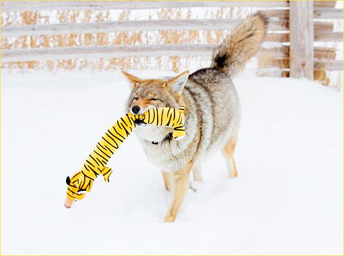 tigergrrr2015W