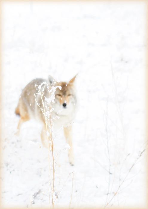 frostfrondandfriend2015W